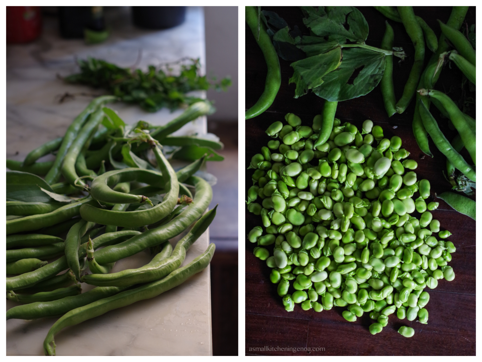 fava beans ready to be shelled for a fantastic fava beans pesto