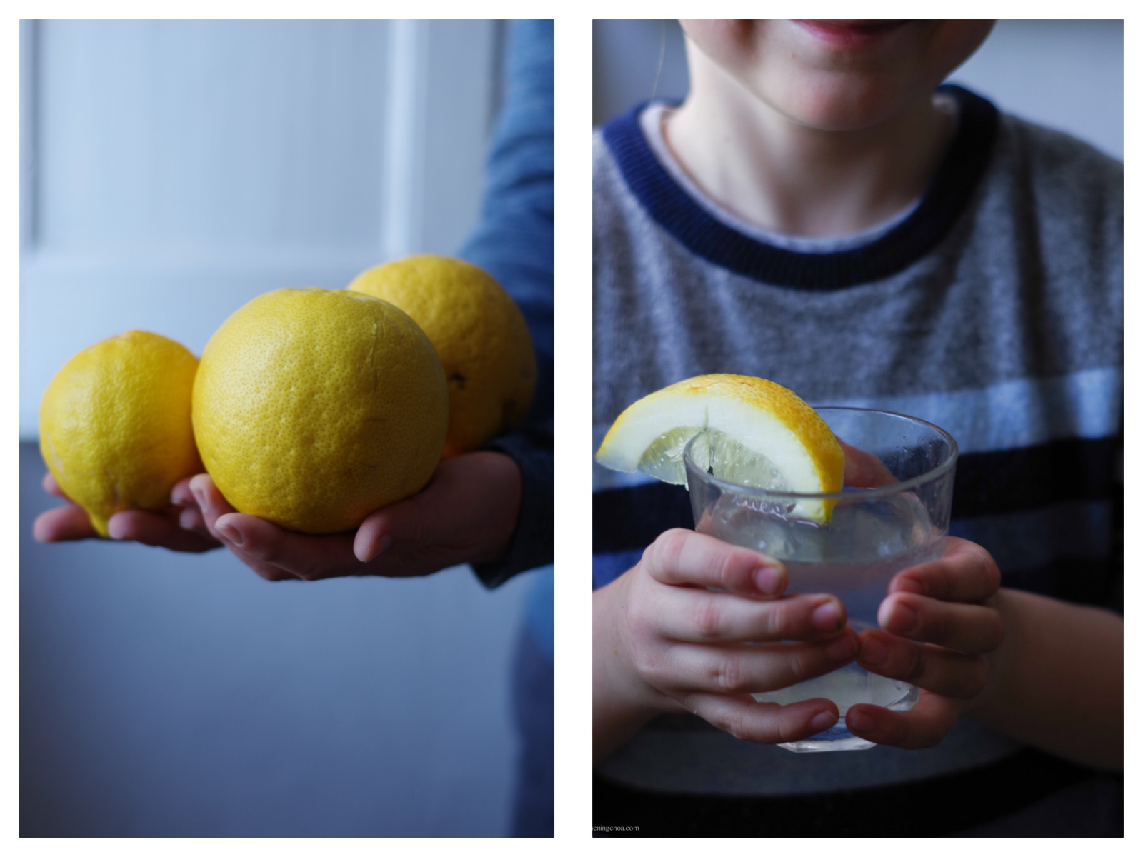 lemons of the Italian Riviera: perfect for making a limoncello recipe of for a fresh lemonade