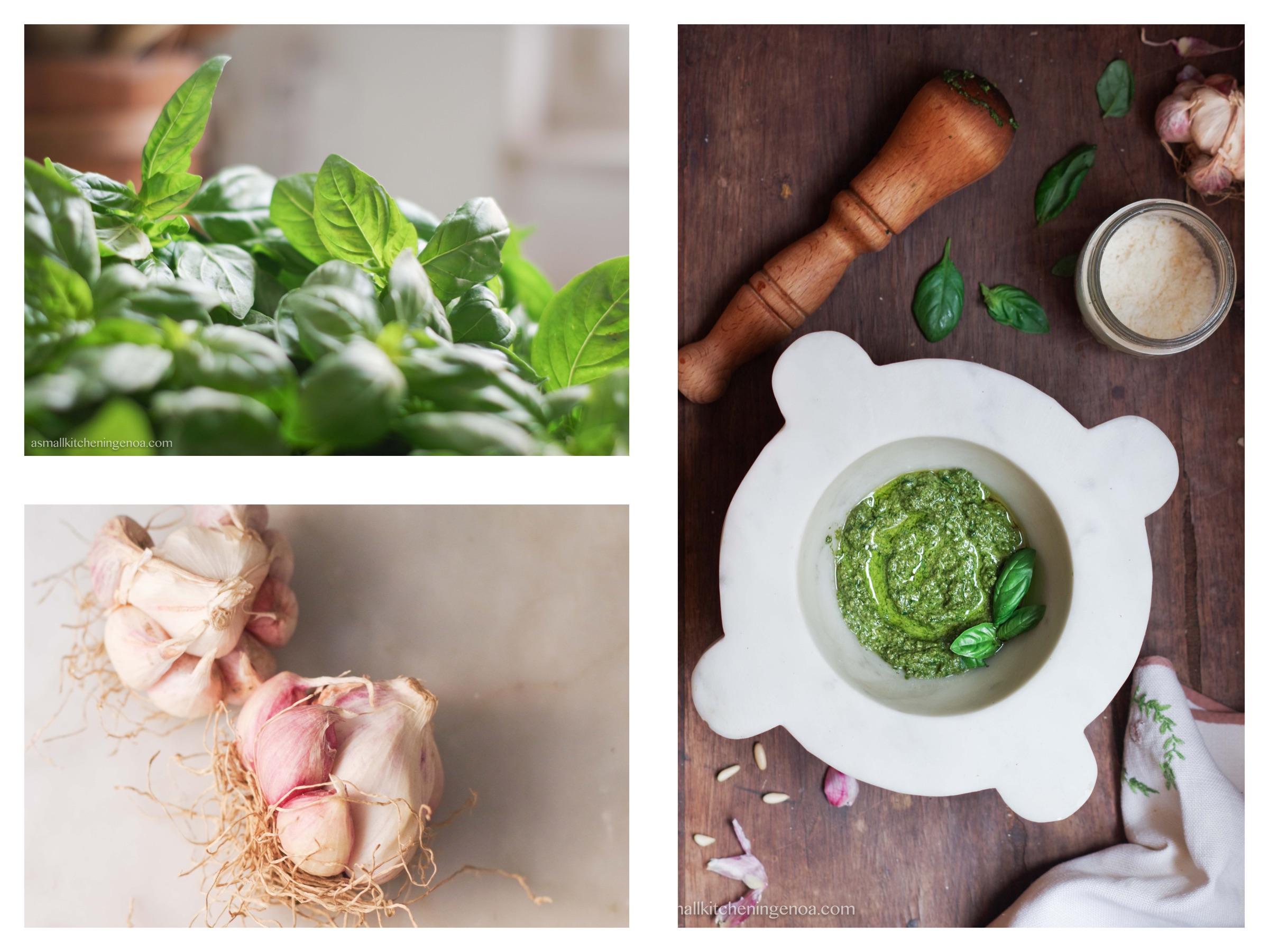 Genoa basil pesto sauce: pesto recipe, pesto ingredients, pesto secrets from Genoa