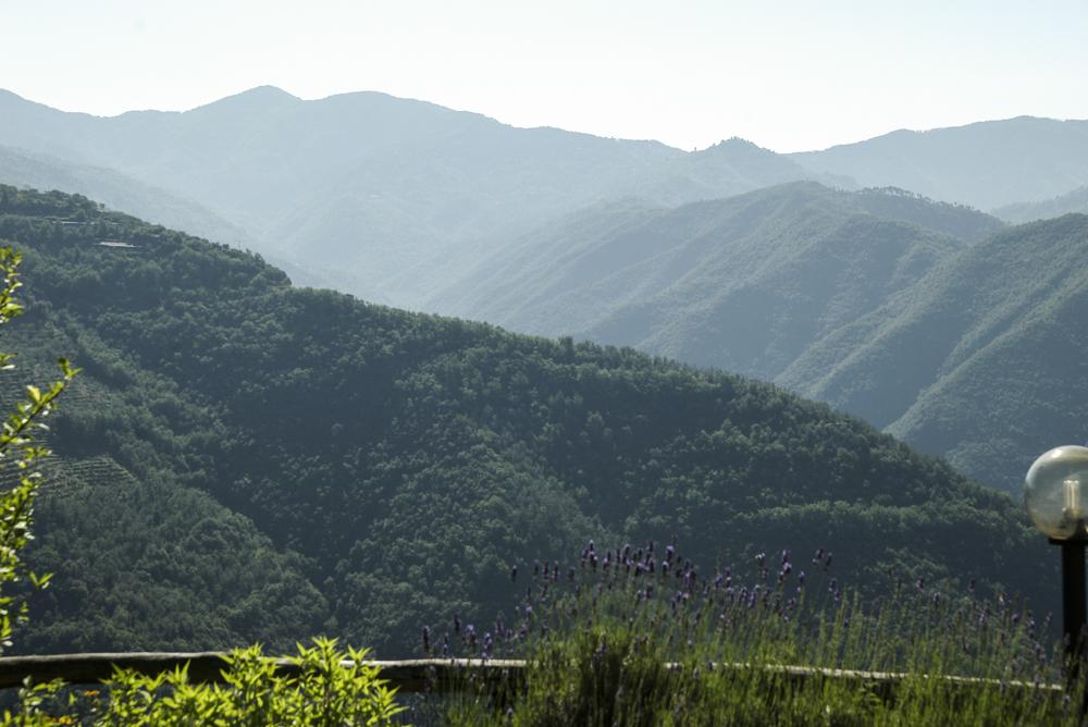 Al Pagan view