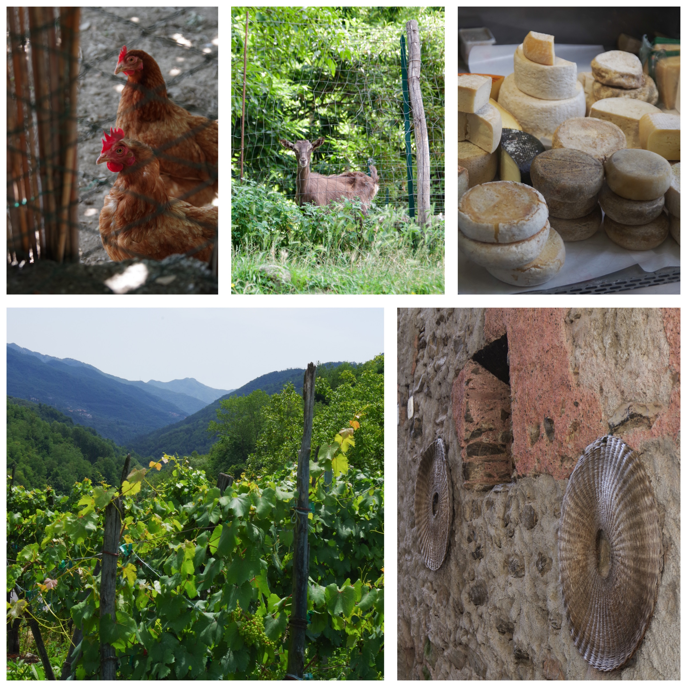 Italian Riviera food experiences: visit to local farmers