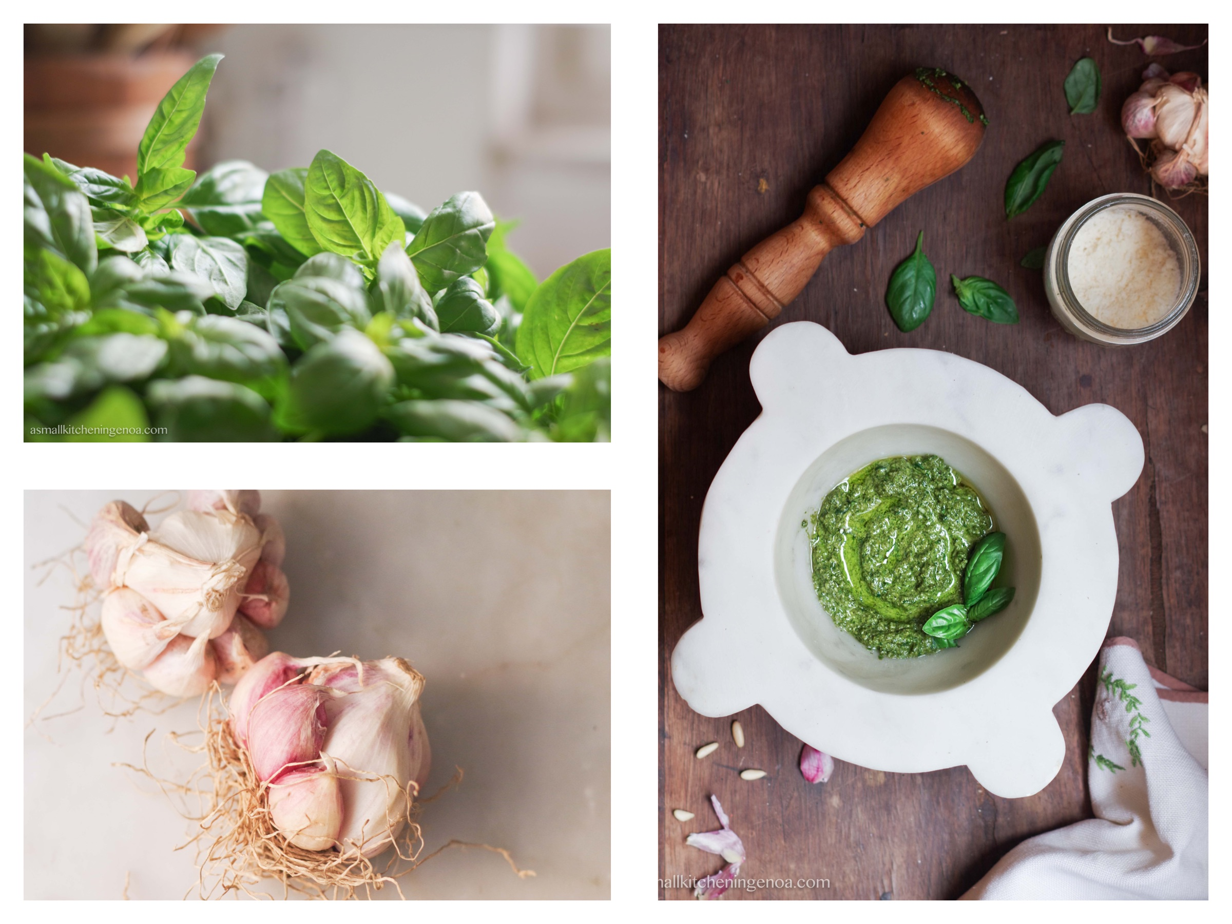 Genoa basil pesto sauce: pesto recipe, pesto ingredients, pesto secrets from Genoa