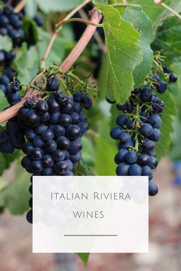 Italian Riviera wine guide